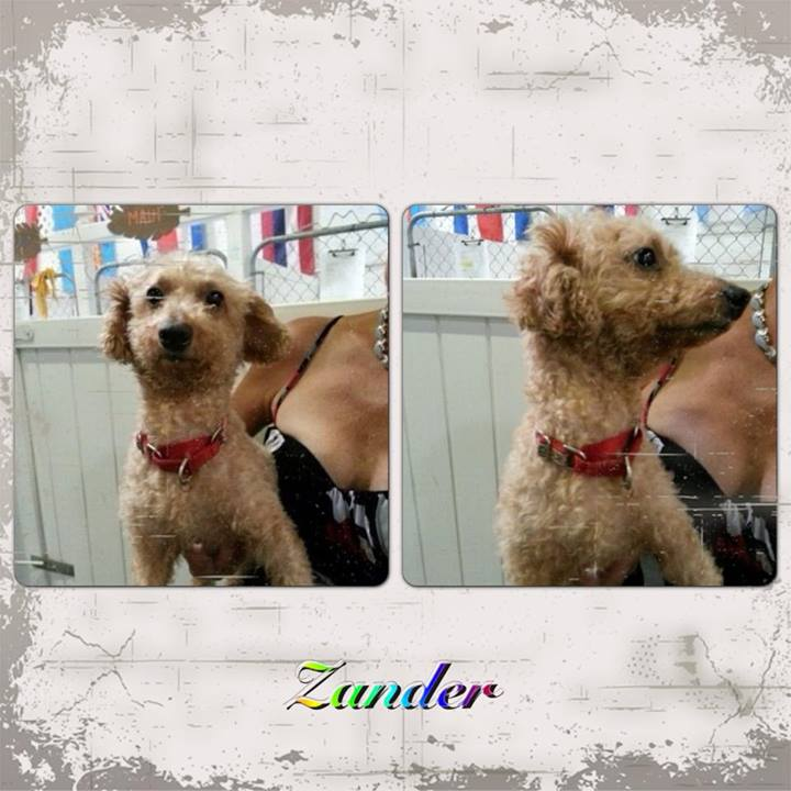 Meet ZANDER!