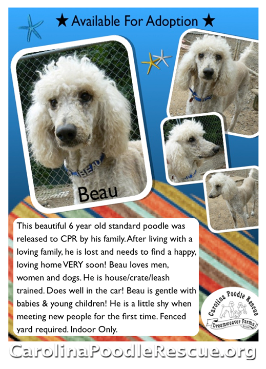 BEAU is Waiting for You @ CPR!