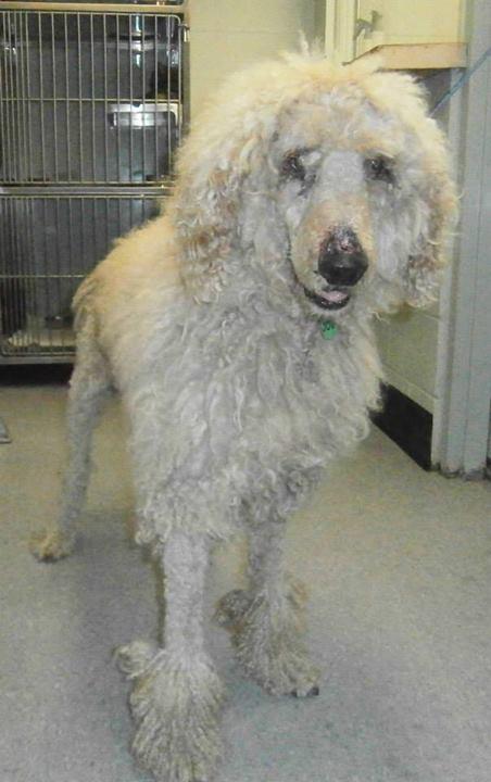 Gaston County NC: SP in Animal Control, NC Animal ID# 4550