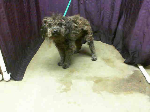 San Bernardino, CA  ~ Animal ID# A453216
