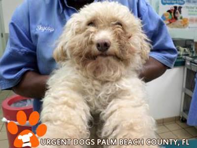Palm Beach County, FL ~ Animal ID# A1698395