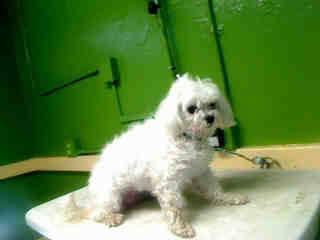 ROXY! Gardena, CA Carson Shelter ~ Animal ID# A4629659