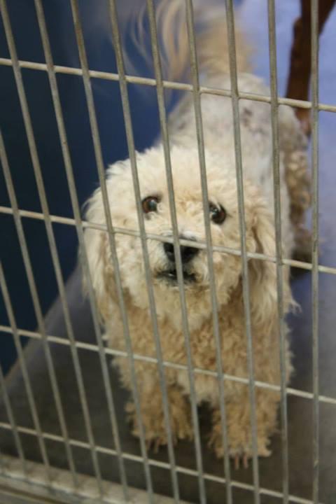 Phoenix, AZ ~ Animal ID# WE122/A3362094