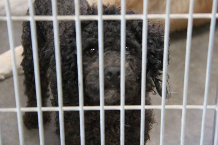 RIP Phoenix, AZ ~ Animal ID# WF188 /A3363323