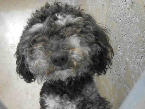 LENNY! Orange County, CA ~ Animal ID# A1245781