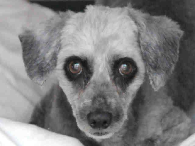 Orange County, CA ~ Animal ID# A1275940