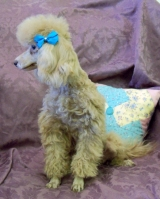tatonka-the-poodle-toy_Animal-ID#5005146-dog-picture-2