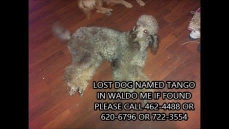 TANGO! ~ Missing, Waldo (ME)